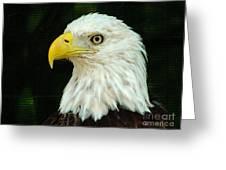 Bald Eagle-42 Greeting Card
