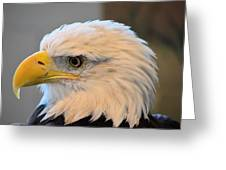 Bald Eagle 7615 Greeting Card