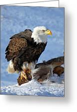 Bald Eagle And Carcass Greeting Card