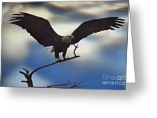 Bald Eagle And Clouds Greeting Card