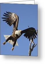 Bald Eagle Ascent 3 Greeting Card