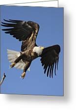 Bald Eagle Ascent 4 Greeting Card