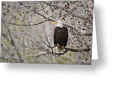 Bald Eagle At Belfry Mt Greeting Card by Roger Snyder