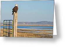 Bald Eagle At Lower Klamath National Wildlife Refuge Greeting Card