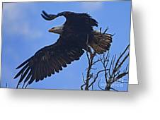 Bald Eagle At Take Off   #6109 Greeting Card