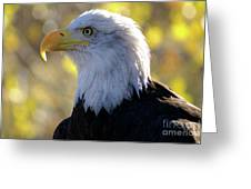 Bald Eagle Beauty Greeting Card