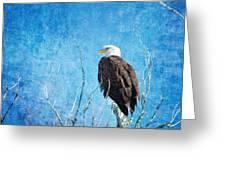 Bald Eagle Blues Greeting Card