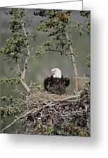 Bald Eagle Calling On Nest Alaska Greeting Card