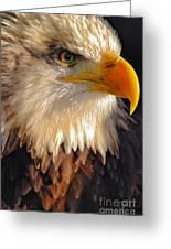 Bald Eagle Close-up Greeting Card
