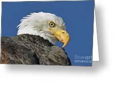 Bald Eagle Closeup Greeting Card