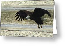 Bald Eagle Coming In For Landing Greeting Card by Mitch Spillane