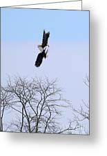 Bald Eagle Courtship Ritual  1337 Greeting Card
