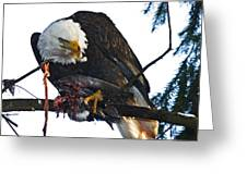 Bald Eagle Eating It's Prey Greeting Card