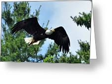 Bald Eagle Feeding 2 Greeting Card