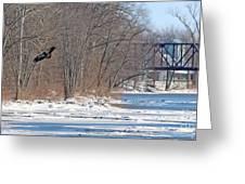 Bald Eagle Fledgling Near Ludwig Mill 2576 Greeting Card