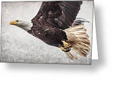 Bald Eagle Fly By Greeting Card