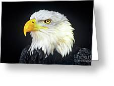 Bald Eagle Hailaeetus Leucocephalus Wildlife Rescue Greeting Card