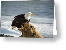 Bald Eagle Homer Spit Alaska Greeting Card