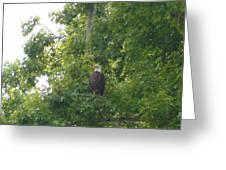 Bald Eagle In Sweetgum Tree Greeting Card