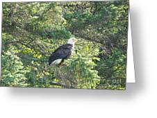 Bald Eagle Greeting Card by Jennifer Kimberly
