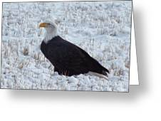 Bald Eagle  Greeting Card by Kimberly Maiden