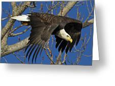 Bald Eagle Launch 1 Greeting Card