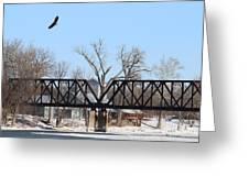 Bald Eagle Near Ludwig Mill Greeting Card