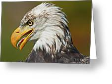 Bald Eagle... Greeting Card