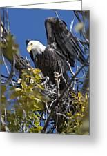 Bald Eagle On Nest Near The Oxbow Greeting Card