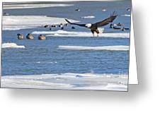 Bald Eagle Over Maumee River 2456 Greeting Card