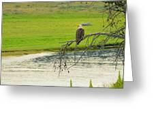 Bald Eagle Overlooking Yellowstone River Greeting Card