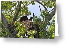 bald eagle pose photographdan sproul