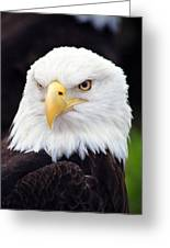 Bald Eagle - Power And Poise 02 Greeting Card