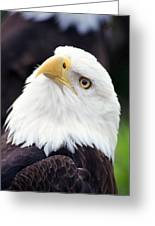 Bald Eagle - Power And Poise 03 Greeting Card