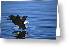 Bald Eagle Striking Kenai Peninsula Greeting Card