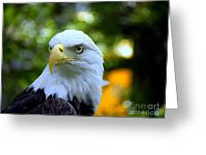 Bald Eagle Greeting Card by Terri Mills