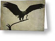 Bald Eagle Texture Greeting Card