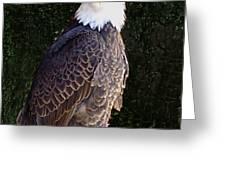 Bald Eagle Two Greeting Card