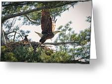 Bald Eagle With Eaglet Greeting Card