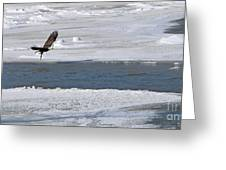 Bald Eagle With Fish 3655 Greeting Card