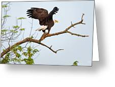 Bald Eagle With Fish Greeting Card