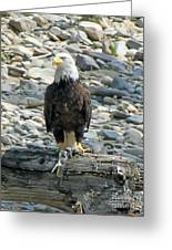 Bald Eagle With Fish On The St. Joe River Greeting Card
