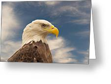 Bald Eagle With Piercing Eyes 1 Greeting Card