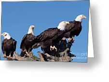 Bald Eagles Quartet Greeting Card