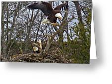 Bald Eagles At Nest Greeting Card