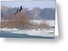 Bald Eagles At Providence Dam 1107 Greeting Card
