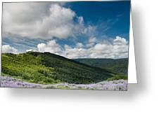 Bald Hills In Spring Greeting Card