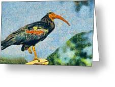 Bald Ibis Greeting Card