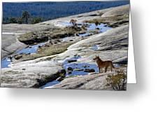 Bald Rock Lookout Greeting Card