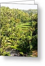 Bali Sayan Rice Terraces Greeting Card